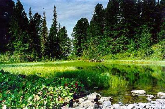 Экологический рейтинг формировался исходя из таких показателей, как природоохранный, социально-экологический и...